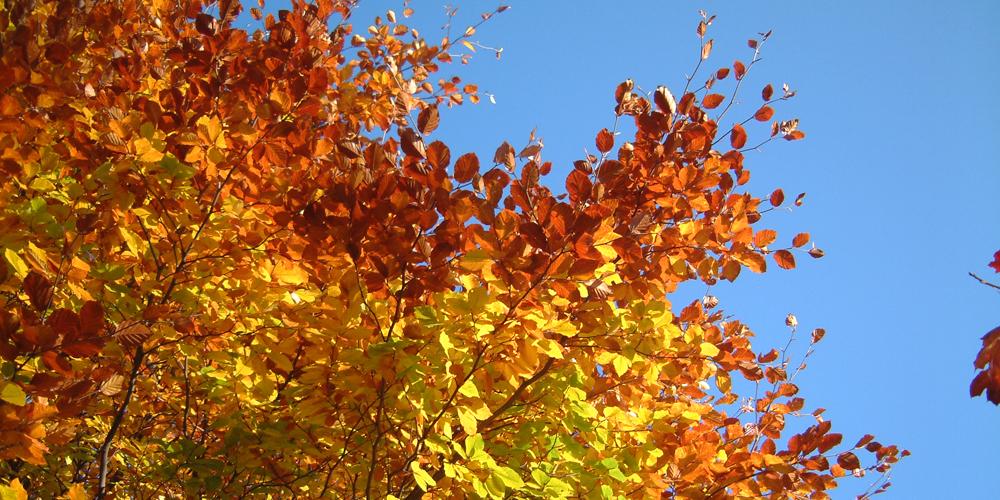 Autumn1000x500