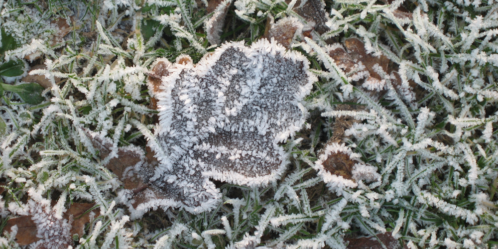 Frost1000x500