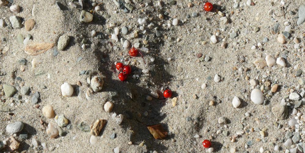 sand&berries1000x500