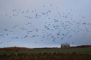 flock landing